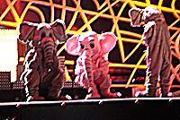 elefanternas kör vilar
